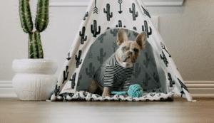Read more about the article Ratgeber Hundehütte – Möglichkeiten indoor und outdoor