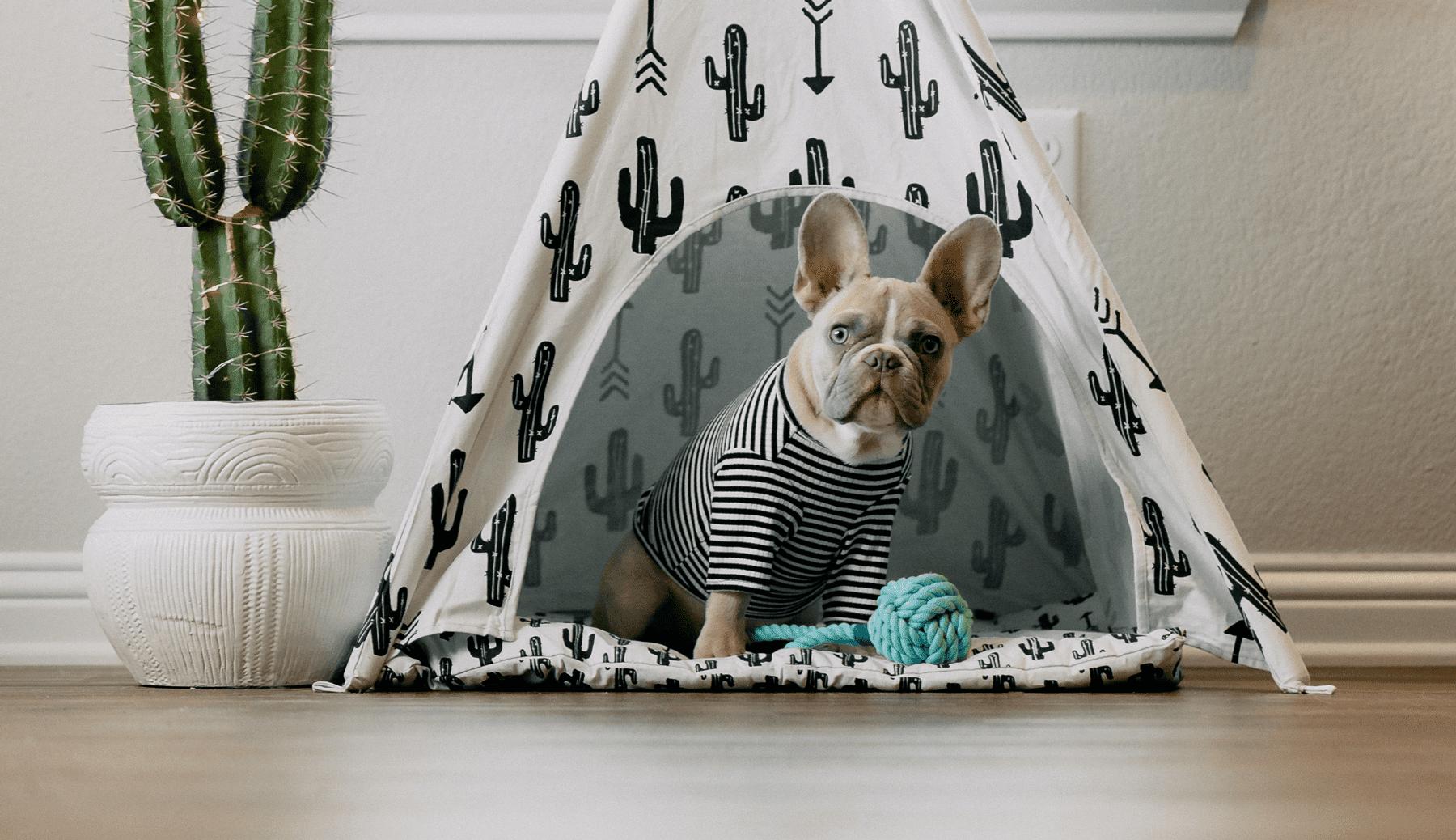 Ratgeber Hundehütte – Möglichkeiten indoor und outdoor