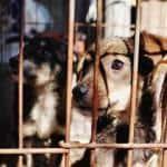 Tierschutz für Hunde – So kann jeder helfen!