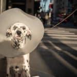 Hundekrankenversicherung: Wann Hundehalter eine Versicherung abschließen sollten
